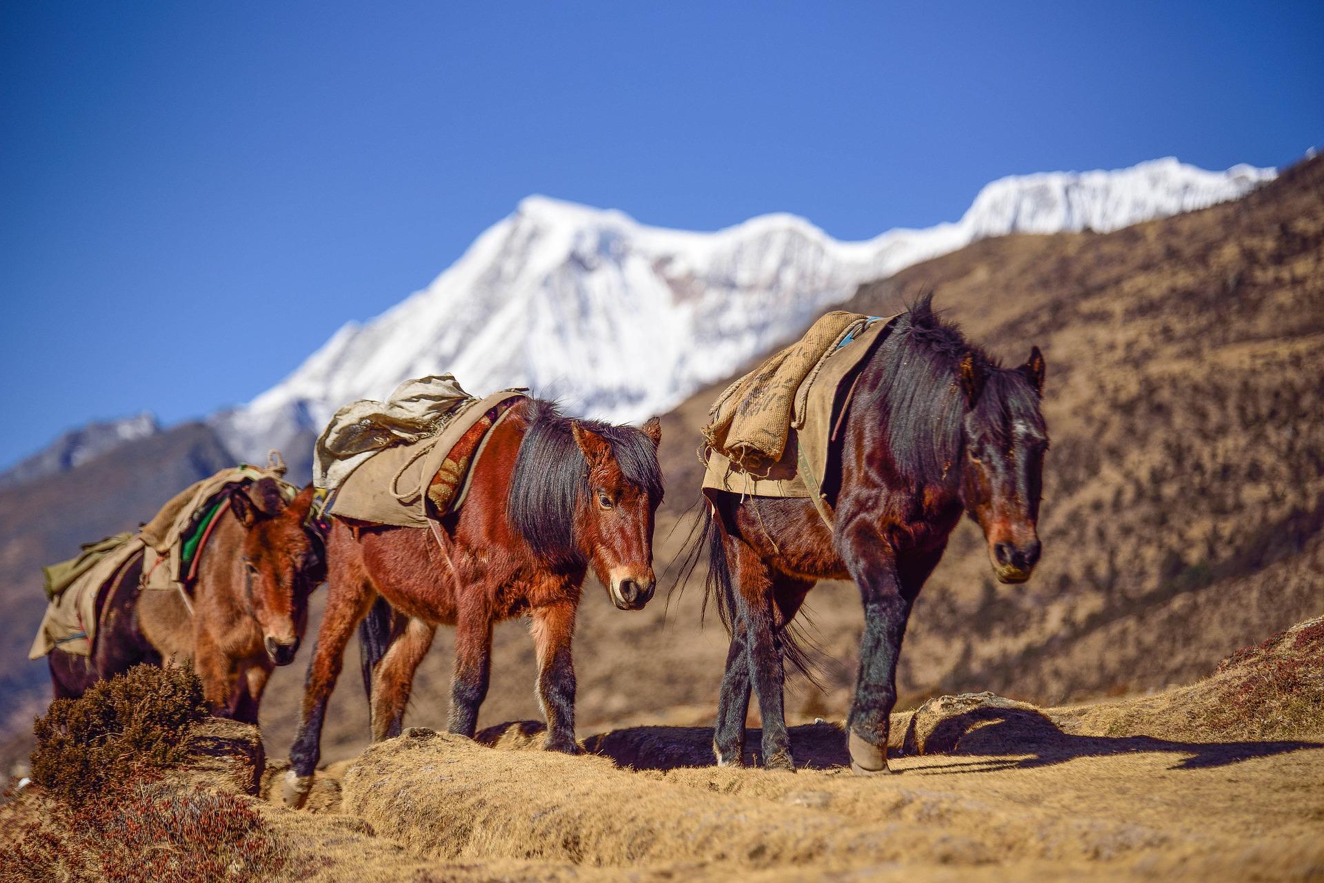 bhutan cavallo montagna